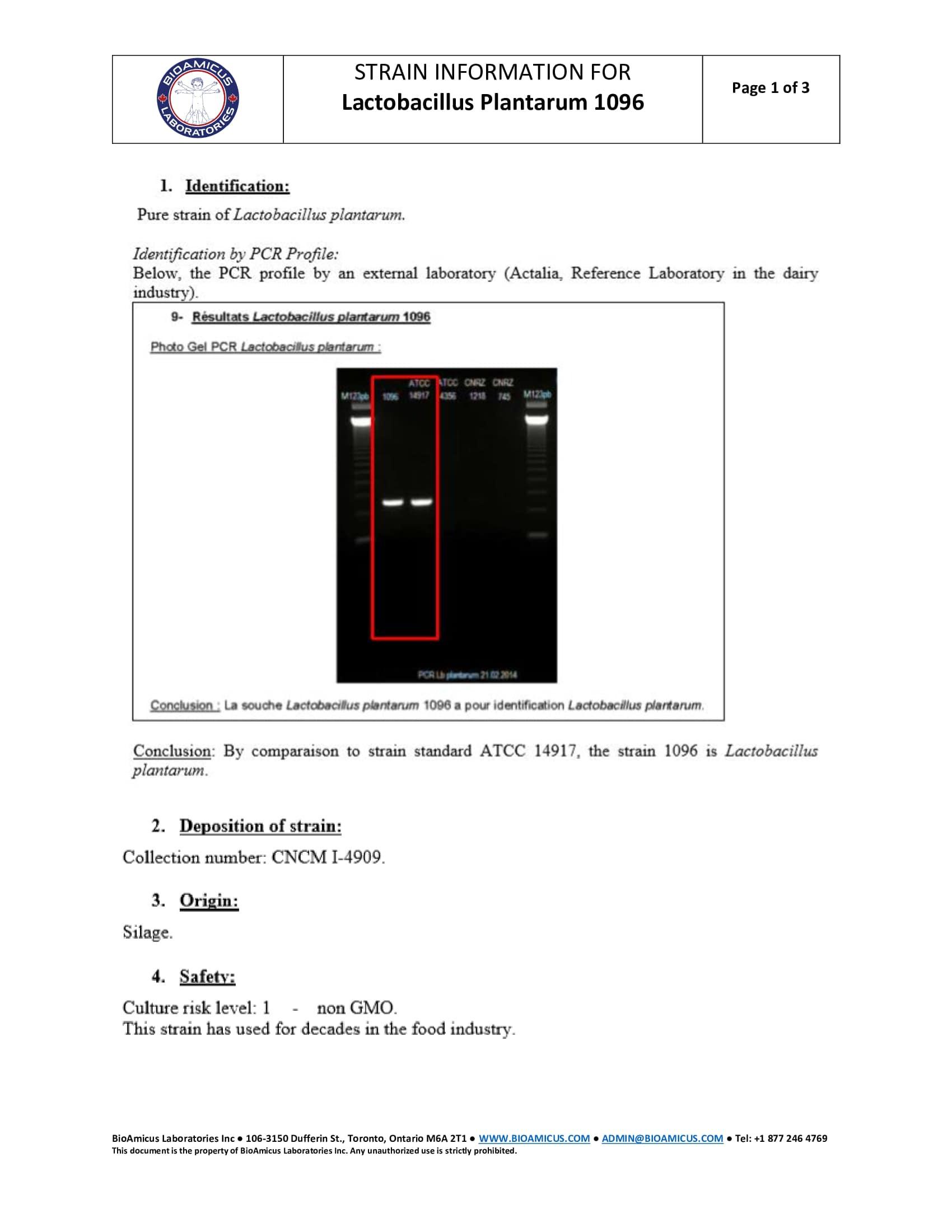 Lactobacillus Plantarum 1096